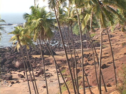 Palm trees grow along a rocky beach Stock Video Footage