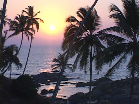 Palm trees grow near the rocks of a beach Stock Video Footage