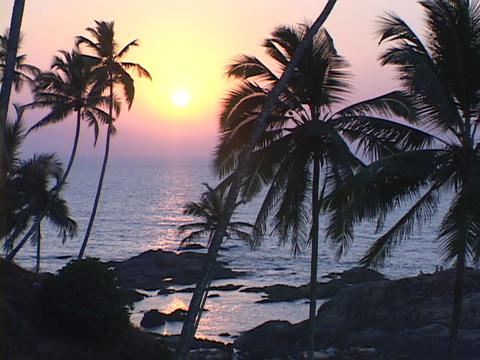 Palm trees grow near the rocks of a beach Footage