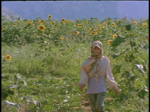 A Kurdish farmer walks through a field of sunflowers Footage