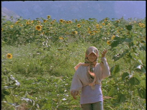A Kurdish farmer walks through a field of sunflowers Stock Video Footage