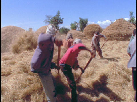 African farmers harvest hay Stock Video Footage