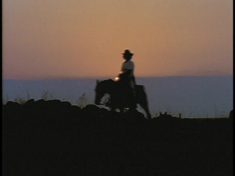 A horseback rider rides a horse during golden hour Live Action