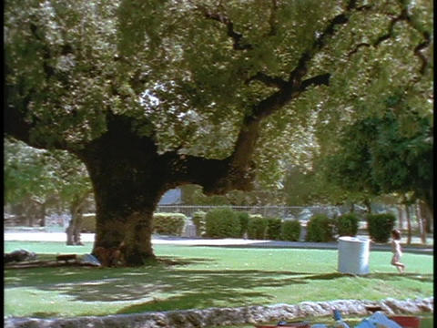 A family picnics under a tree Stock Video Footage