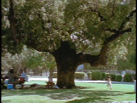 A family picnics under a tree Footage