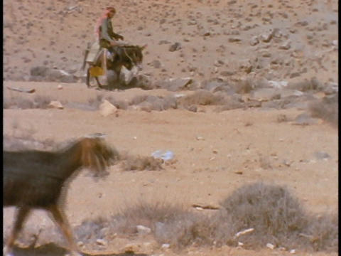 A Bedouin man leads his sheep as he rides on a donkey Stock Video Footage