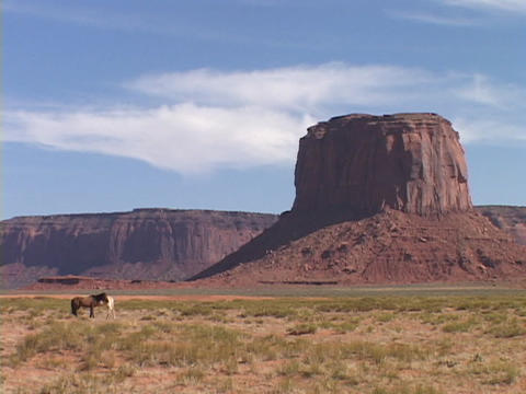 horses stand in the brush at the base of a butte in Monument Valley Footage