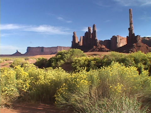 Clusters of rabbit, brush bloom at the base of the Totem... Stock Video Footage
