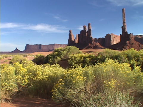 Clusters of rabbit, brush bloom at the base of the Totem Pole rock formation in Monument Valley, Uta Footage