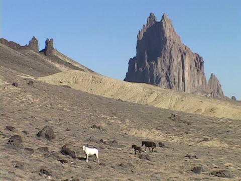 Wild horses roam on the desert in front of the Shiprock monolith in New Mexico Footage