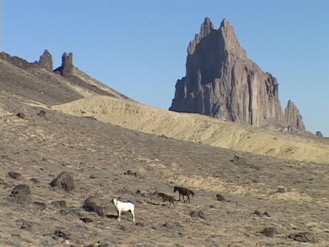 Wild horses roam on the desert in front of the Shiprock... Stock Video Footage