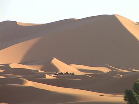 Camels cross the Sahara Desert in Egypt Stock Video Footage