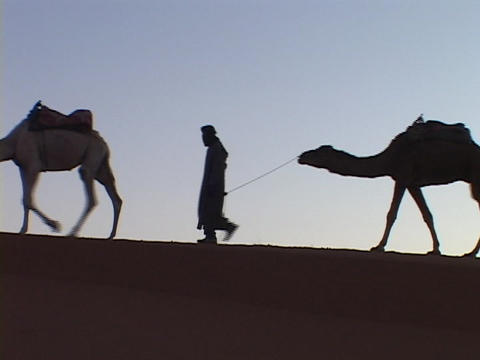 Men lead camels across a desert Stock Video Footage