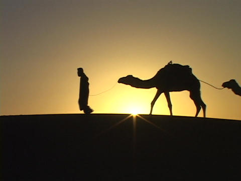 A man leads camels through the desert Footage