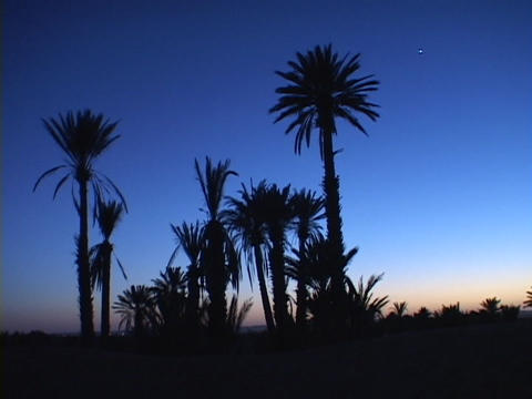Palm trees stand as silhouettes against a tropical golden-hour Footage
