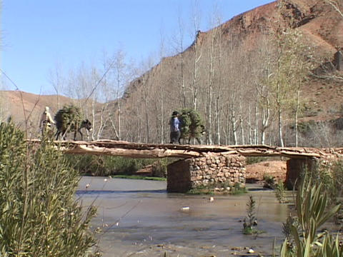 Donkeys carrying burdens of greenery walk across a stone footbridge accompanied by two herders Footage