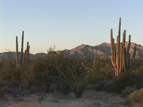 Cacti frames distant mountains and blue-skies in the Baja desert in Mexico Footage
