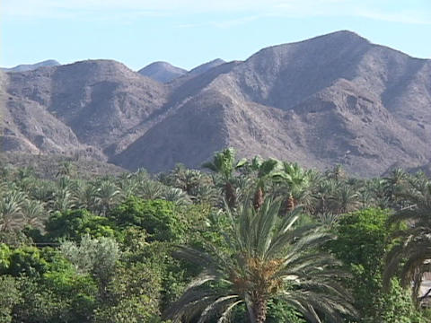 A palm oasis rests before an arid mountain range Stock Video Footage