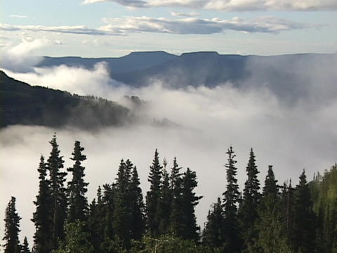 Fog rolls in a high forest between mountain slopes Stock Video Footage