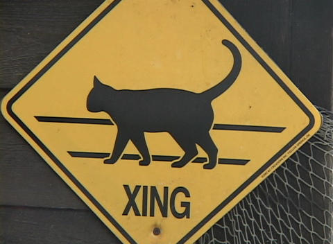A yellow cat crossing sign hangs on a fence Stock Video Footage