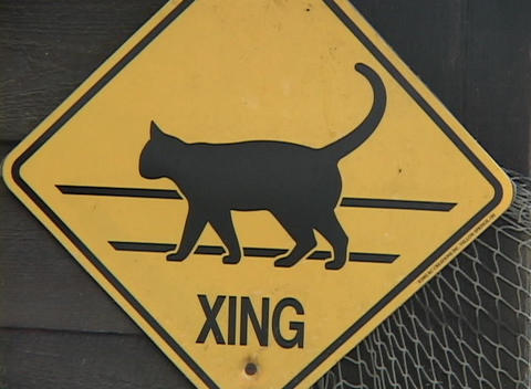 A yellow cat crossing sign hangs on a fence Live Action