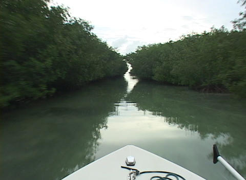 A boat cruises through a narrow canal surrounded by trees Stock Video Footage