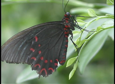 A butterfly sits on a leaf Footage
