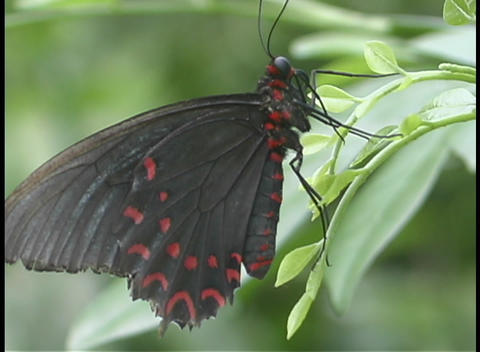A butterfly sits on a leaf Stock Video Footage