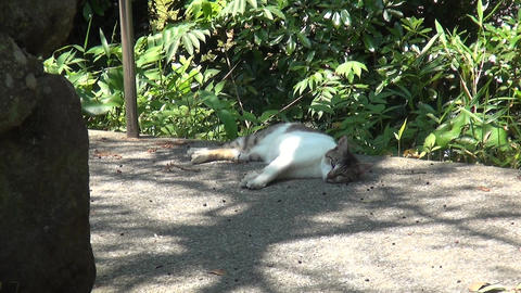 Sleeping cat in the shade Live Action