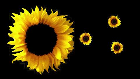 Sunflower 30 Animation