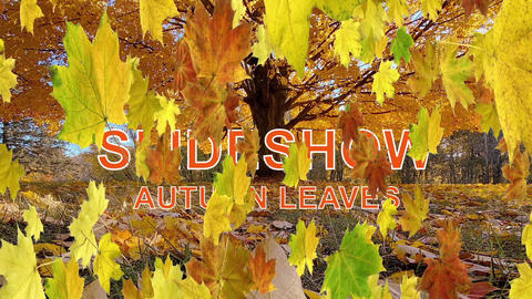 Autumn Leaves Transitions - Slideshow After Effects Template