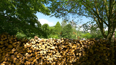 Stack of firewood between trees in summer. Nature Background Footage