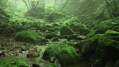 silent and misty forest and old rocks, Rock garden... Stock Video Footage