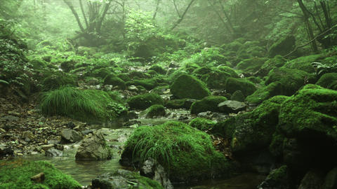 silent and misty forest and old rocks, Rock garden Ootsuki in Japan 大月 ロ Footage