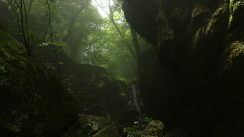 Dynamic tear with mist in forest, Rock garden Ootsuki in Japan 大月 ロック Footage