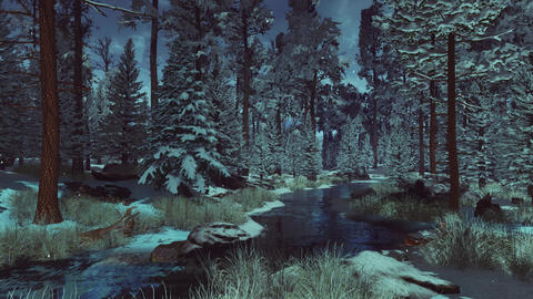 Calm winter morning or dusk in snowy fir forest Live Action