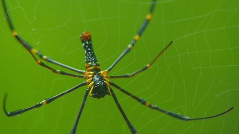 close up video spider on web in tropical forest Live Action