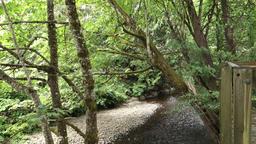 Establishing Shot Creek Near Fish Hatchery in Issaquah Washington Footage