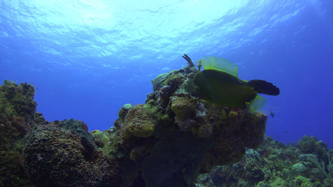 Curious fish swims around corals while the sun illuminates the water surface Footage