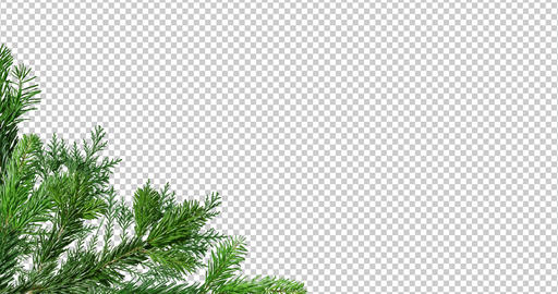 Corner of Green branch of pine tree isolated on black and red background screen Animation