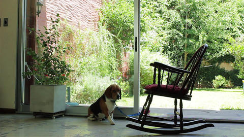 Dog Lying Near a Rocking Chair Live Action