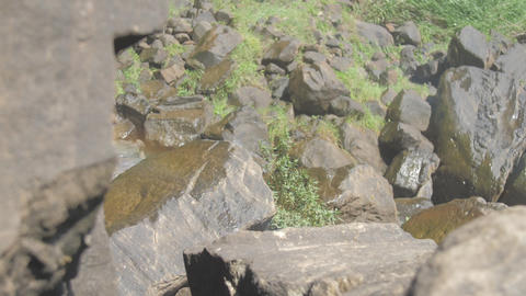 small bush among bare rocks waved by wind in summer Live Action