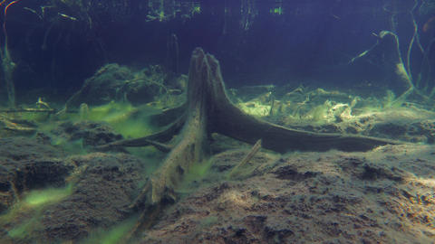 Old stump underwater in lake bottom Live Action