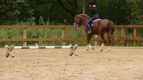 galloping horse Live Action