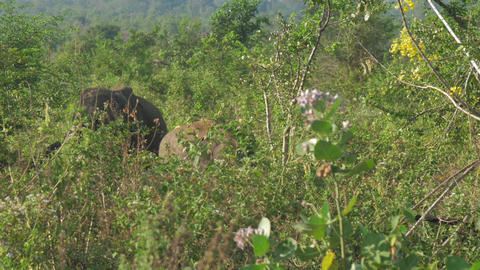 huge elephants stand behind high green grass on sunny day Live Action