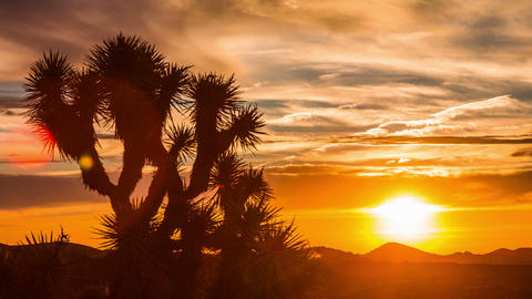 Time Lapse - Sunrise over Joshua Tree with Beautiful Cloudscape Footage