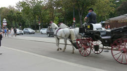 An horses carriage Footage