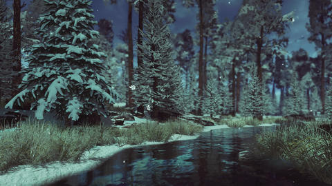 Conifer forest at winter dusk with slight snowfall Live Action