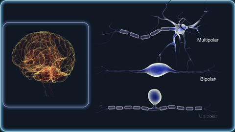 Various types of neurons Animation