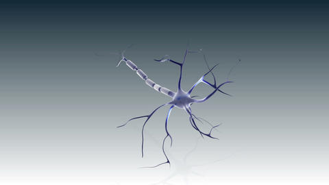 Structure of a neuron Animation